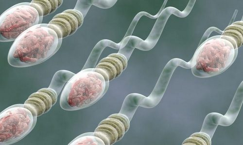 Enhance Sperm Production