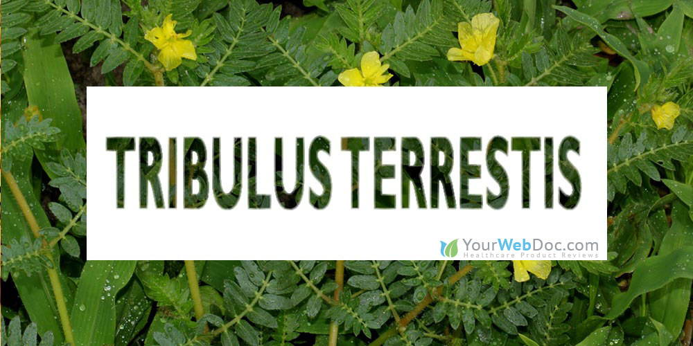 Tribulus terrestris for Sperm Production